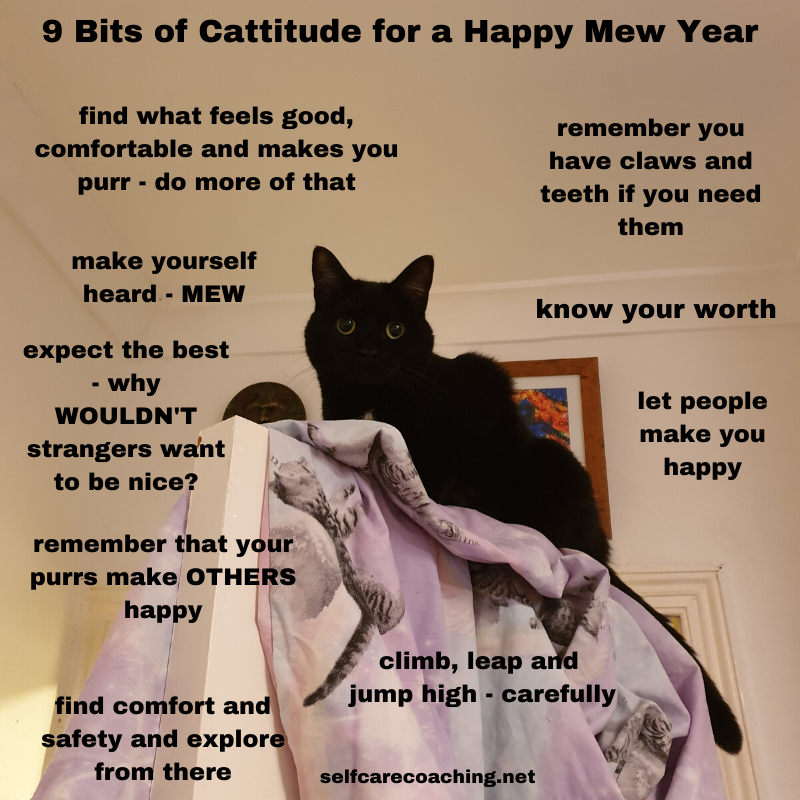 Cattitude for a Happy Mew Year