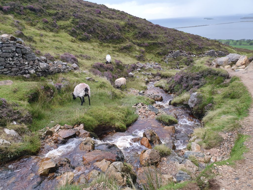 Much easier on the way down the Reek (aka Croagh Patrick mountain) in Ireland